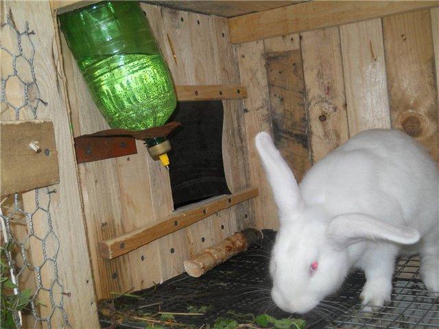 Фото как сделать кролика