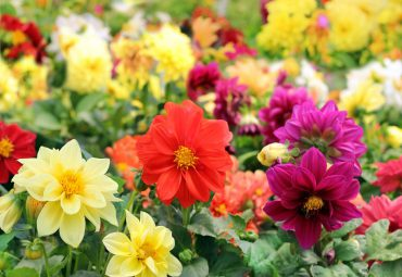 Секреты выращивания однолетних цветов на даче